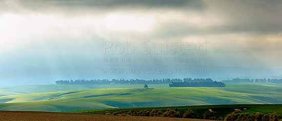 Lush farmland and stock grazing on a moody misty evening with crepuscular sun rays illuminating grass and windbreaks. Panorama, Clarks Junction, Dunedin City District, Otago Region, New Zealand (NZ) stock photo.