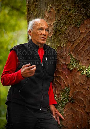 Kevin Prime portrait amongst Kauri forest (Agathis australis), Waipoua Forest, Far North District, Northland Region, New Zealand (NZ) stock photo.