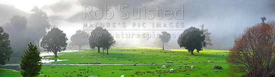 Misty morning farmland in the Wakapuaka River Valley amongst remnant Totara and Kahikatea forest trees, sheep grazing and sun breaking through. Panorama, Hira, Nelson City District, Nelson Region, New Zealand (NZ) stock photo.