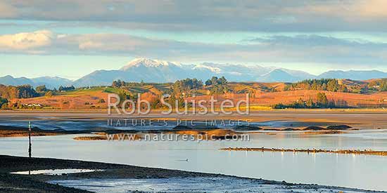 Moutere Inlet on the Moutere River mouth. Seagulls, shorebirds and waders feeding at low tide. Wintery Richmond Ranges beyond. Panorama, Motueka, Tasman District, Tasman Region, New Zealand (NZ) stock photo.