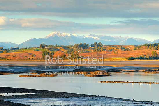 Moutere Inlet on the Moutere River mouth. Seagulls, shorebirds and waders feeding at low tide. Wintery Richmond Ranges beyond, Motueka, Tasman District, Tasman Region, New Zealand (NZ) stock photo.