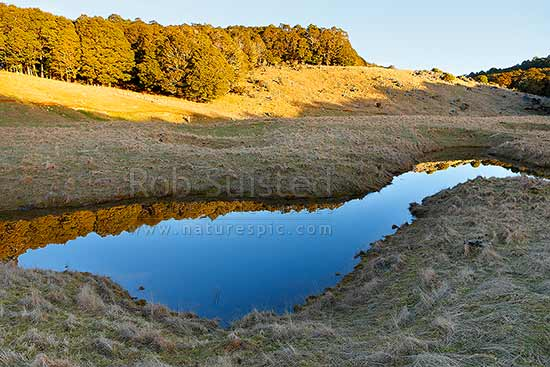 Canaan Downs farmland reflected in calm mountain tarn or lake at dusk. Beech forest behind, Abel Tasman National Park, Tasman District, Tasman Region, New Zealand (NZ) stock photo.
