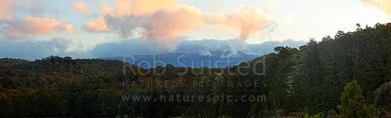 Dusk over NZ native Beech forest canopy (800masl) looking towards Kahurangi N.P. and the Devil Range. Panorama, Abel Tasman National Park, Tasman District, Tasman Region, New Zealand (NZ) stock photo.