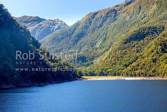 Lake Beddoes and Pitt River below Oilskin Pass. Flowering Rata forest. Wild Natives River, Bligh Sound, Fiordland National Park, Southland District, Southland Region, New Zealand (NZ) stock photo.
