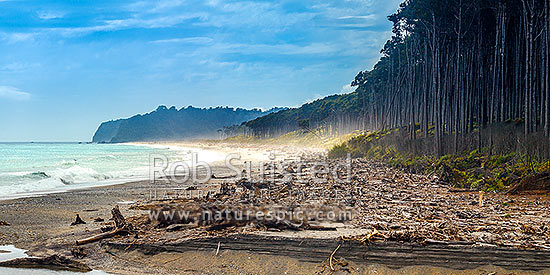 Bruce Bay coastline looking towards the Makawhio (Jacobs) River mouth and Makawhio Point and Jacobs Bluff. Coastal forest of Rimu trees. South Westland. Panorama, Bruce Bay, Westland District, West Coast Region, New Zealand (NZ) stock photo.