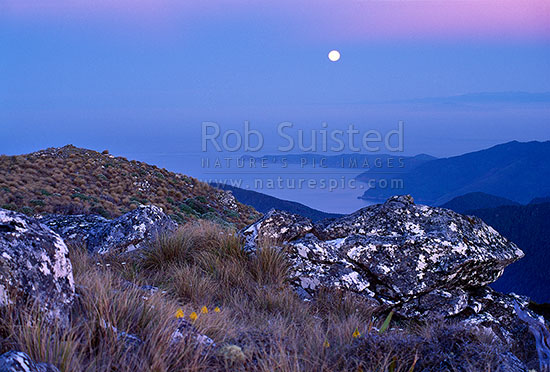 Moon rise over Cape Jackson; from Mount (Mt) Stokes (1203m), Marlborough Sounds, Marlborough District, Marlborough Region, New Zealand (NZ) stock photo.