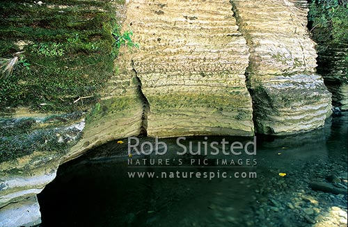 Limestone rock formations in the Fox River, Paparoa National Park, Buller District, New Zealand (NZ) stock photo.