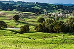 Northland farmland, Paparoa Valley