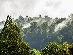Kauri forest cloud lifting, Northland