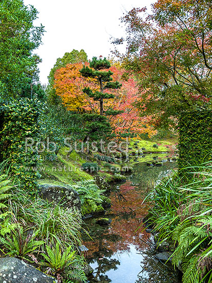 Hamilton Gardens, with part of the Japanese Garden of Contemplation reflecting in water pond at dusk. International Garden of the Year 2014, Hamilton, Hamilton City District, Waikato Region, New Zealand (NZ) stock photo.