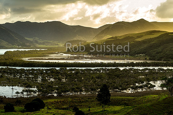 Whangape Harbour evening light, with mangrove forests in the Awaroa River, Whangape, Far North District, Northland Region, New Zealand (NZ) stock photo.