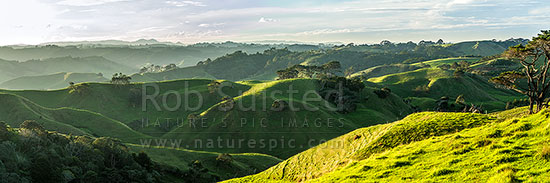 Awhitu Peninsula farmland panorama looking towards Awhitu Central. Lush hill country in afternoon light, Awhitu Peninsula, Papakura District, Auckland Region, New Zealand (NZ) stock photo.