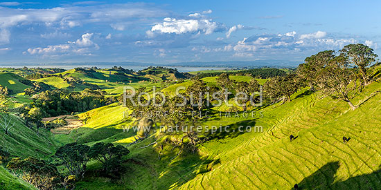 Awhitu farmland with Manukau Harbour and South Auckland beyond. Panorama, Awhitu Peninsula, Papakura District, Auckland Region, New Zealand (NZ) stock photo.