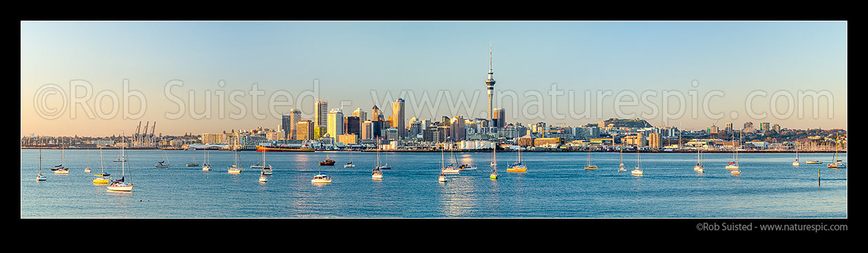 Image of Auckland City Skyline, CBD, and moored sailboats, seen from across the Waitemata Harbour on a calm morning. Panorama as golden sun lights the city at dawn, Auckland, Auckland City District, Auckland Region, New Zealand (NZ) stock photo image