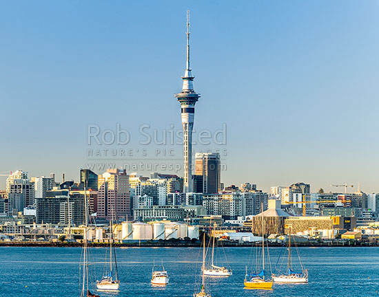Auckland City Sky Tower above the CBD and other building at sunrise. Yachts moored on the Waitemata Harbour. Square format, Auckland, Auckland City District, Auckland Region, New Zealand (NZ) stock photo.