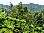 Native forest, North Taranaki