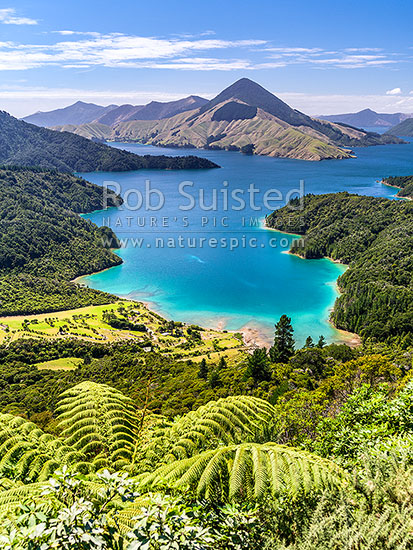 Fitzroy Bay in Pelorus Sound, Marlborough Sounds, with Savill Bay in foreground, Mt Shewell (775m) centre, Marlborough Sounds, Marlborough District, Marlborough Region, New Zealand (NZ) stock photo.
