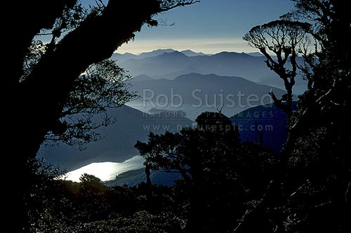 Looking down into misty Pelorus Sound. from the forest on Mount (Mt) Stokes (1203m), Marlborough Sounds, Marlborough District, Marlborough Region, New Zealand (NZ) stock photo.