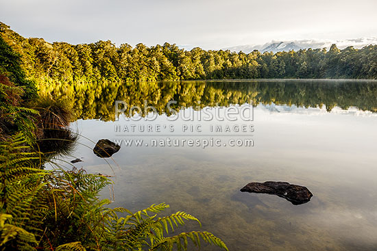 Lake Rotokura sunrise, reflecting Mount (Mt) Ruapenu and forest in calm waters. Sacred Tapu site for Ngati Rangi, Karioi, Ruapehu District, Manawatu-Wanganui Region, New Zealand (NZ) stock photo.