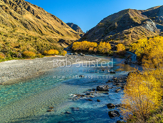 Shotover River with autumn colours. The Branches Road at right, Shotover River Valley, Queenstown Lakes District, Otago Region, New Zealand (NZ) stock photo.
