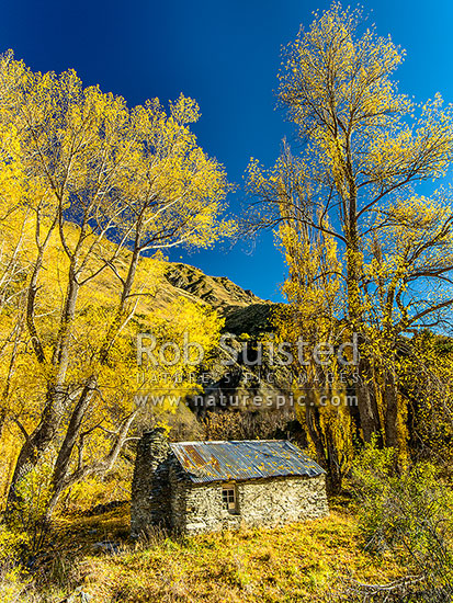 Old Stone hut on Strohles Flat in the Shotover Valley. Autumn coloured trees, Shotover River Valley, Queenstown Lakes District, Otago Region, New Zealand (NZ) stock photo.