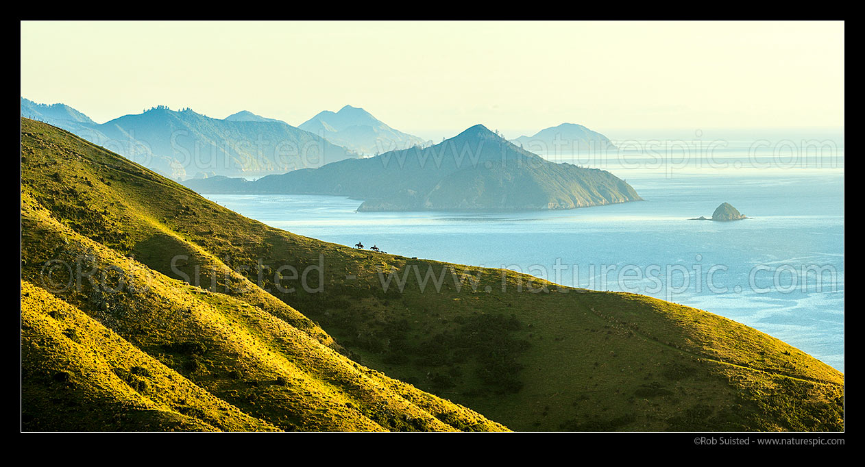 Image of Shepherds climbing ridge above Admiralty Bay (right) and D'Urville Island (beyond), mustering with horses and dogs. Panorama, French Pass, Marlborough Sounds, Marlborough District, Marlborough Region, New Zealand (NZ) stock photo image