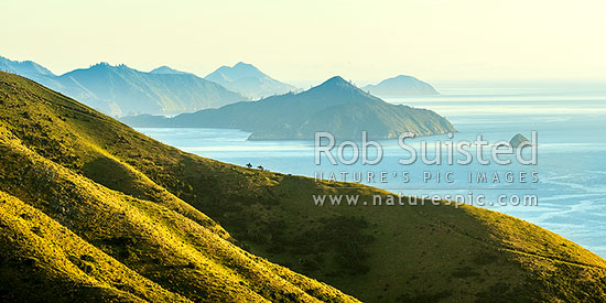 Shepherds climbing ridge above Admiralty Bay (right) and D'Urville Island (beyond), mustering with horses and dogs. Panorama, French Pass, Marlborough Sounds, Marlborough District, Marlborough Region, New Zealand (NZ) stock photo.