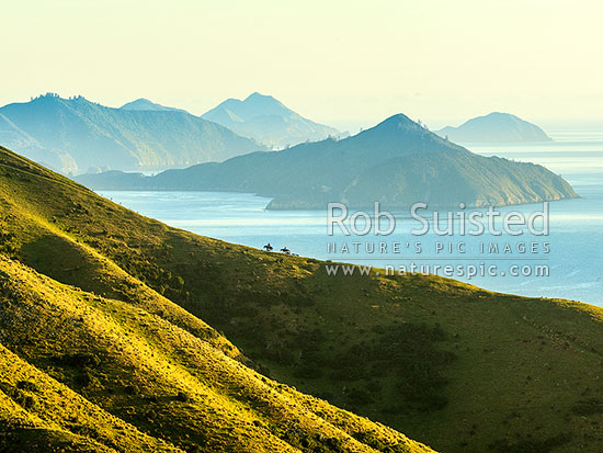 Shepherds climbing ridge above Admiralty Bay (right) and D'Urville Island (beyond), mustering with horses and dogs, French Pass, Marlborough Sounds, Marlborough District, Marlborough Region, New Zealand (NZ) stock photo.