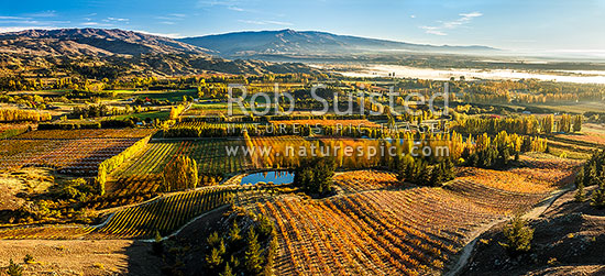 Stone fruit orchards and grape vines at Blackmans on an autumn morning. Aerial panorama. Hinton's orchards, Earnscleugh, Alexandra, Central Otago District, Otago Region, New Zealand (NZ) stock photo.