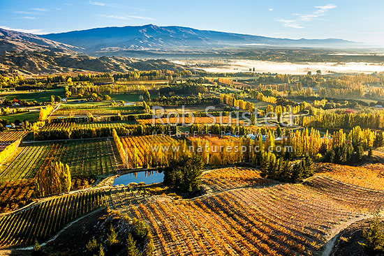 Stone fruit orchards and grape vines at Blackmans on an autumn morning with mist over the Clyde (Mata-Au) River and Clyde beyond. Hinton's orchard in front. Aerial view, Earnscleugh, Alexandra, Central Otago District, Otago Region, New Zealand (NZ) stock photo.