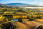 Central Otago orchards, Autumn