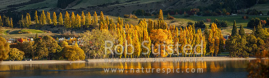 Wanaka township and Lake Wanaka with golden autumn coloured trees reflecting in waterfront foreshore. Panorama, Wanaka, Queenstown Lakes District, Otago Region, New Zealand (NZ) stock photo.