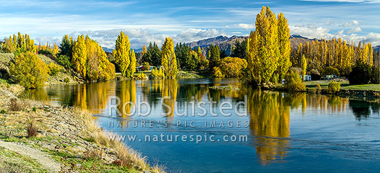 Clutha River Mata-Au with autumn coloured trees reflecting in calm morning water. Near outlet from Lake Wanaka, and start of this mighty river. Panorama, Albert Town, Queenstown Lakes District, Otago Region, New Zealand (NZ) stock photo.