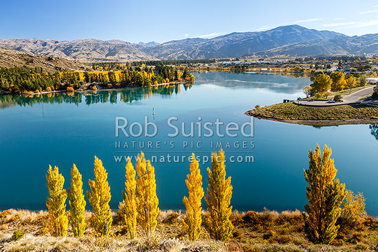 Lake Dunstan at the confluence of the Kawarau River (centre) and Clutha River (Mata-Au) at Cornish Point. Autumn colours. Carrick Range and Mt Difficulty behind, Cromwell, Central Otago District, Otago Region, New Zealand (NZ) stock photo.