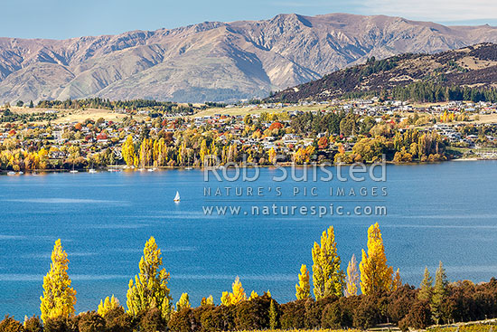 Lake Wanaka and Wanaka township. Looking across Roys Bay, with sailing boat. Autumn golden colours, Wanaka, Queenstown Lakes District, Otago Region, New Zealand (NZ) stock photo.