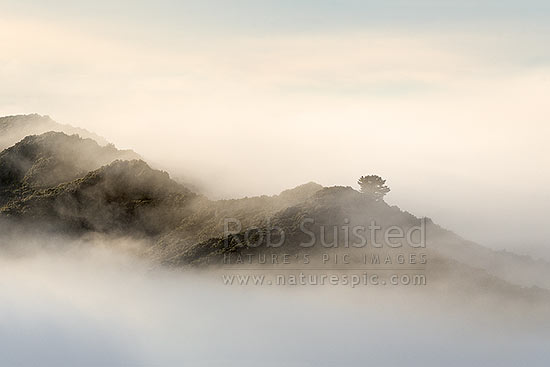 Te Urewera foothills in the mist. Forest ridgeline breaking morning fog hanging in bush filled valleys, Wairoa, Wairoa District, Hawke's Bay Region, New Zealand (NZ) stock photo.