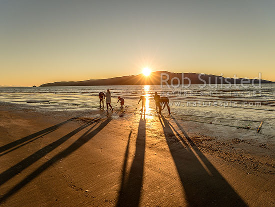 Family checking their fishing net for fish, as the sun sets behind Kapiti Island Nature Reserve, Paraparaumu, Kapiti Coast District, Wellington Region, New Zealand (NZ) stock photo.