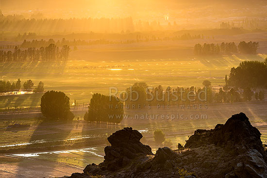 Central Otago dawn over farmland and shelterbelts. Agricultural irrigation from sprinklers and flooding visible at dawn, near Earnscleugh and Blackmans, Alexandra, Central Otago District, Otago Region, New Zealand (NZ) stock photo.