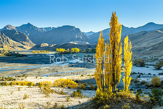 Upper Shotover River valley and The Branches Station on a frosty autumn morning. Golden coloured trees, Branches Station, Shotover Valley, Queenstown Lakes District, Otago Region, New Zealand (NZ) stock photo.