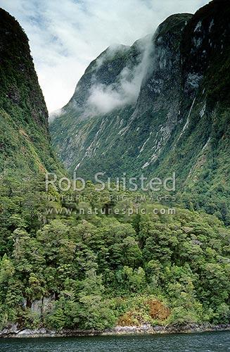 Glacier carved 'U-Shaped' valley entering Doubtful Sound