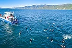Swimming with dolphins, Kaikoura