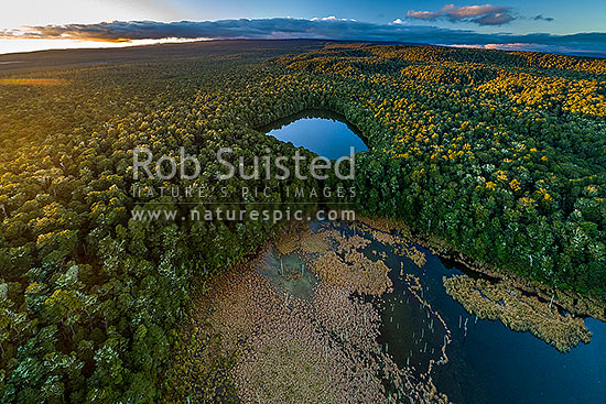 Lake Rotokura Ecological Reserve and beech forest, tapu, or sacred, to Ngati Rangi, on the flanks of Mt Ruapehu. Lake Rotokura and Dry Lake. Aerial view at sunset, Rangataua, Ruapehu District, Manawatu-Wanganui Region, New Zealand (NZ) stock photo.