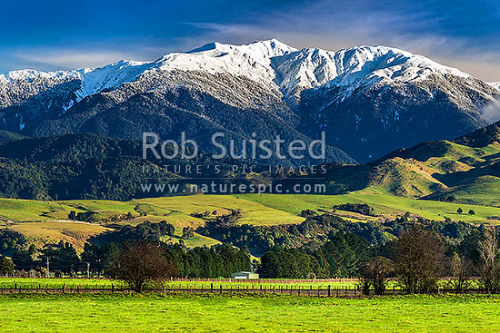 Tararua Ranges above lush Wairarapa farmland near Masterton. Mt Holdsworth (1470m) above, covered in fresh winter snowfall above, Waingawa, Carterton District, Wellington Region, New Zealand (NZ) stock photo.