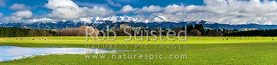 Tararua Ranges above lush Wairarapa farmland near Masterton. Fresh winter snowfall above grazing sheep. Panorama, Opaki, Masterton, Masterton District, Wellington Region, New Zealand (NZ) stock photo.