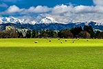 Wairarapa sheep farming, Tararuas behind
