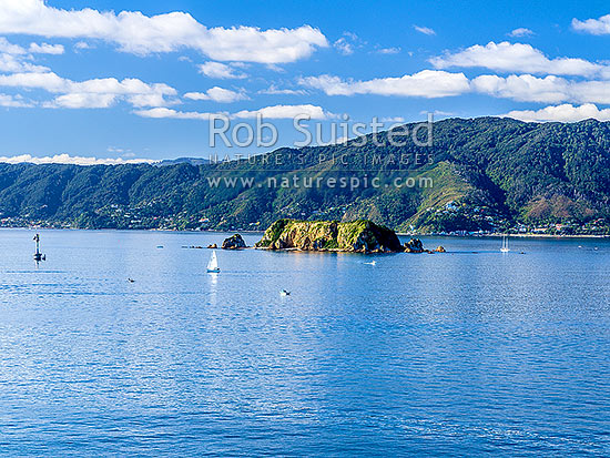 Makaro / Ward Island in Wellington Harbour, with Eastbourne and East Harbour Regional Park and hills behind. Sailboats, yachts and small boats out on a fine autumn day, Eastbourne, Hutt City District, Wellington Region, New Zealand (NZ) stock photo.