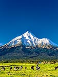 Mt Taranaki and dairy farmland