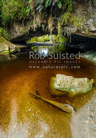 Oparara Arch. The Oparara River entering the little Oparara arch (Moria Gate). Clean, dark, tanin stained water moving slowly under the limestone arch, Karamea,Kahurangi National Park, Buller District, West Coast Region, New Zealand (NZ) stock photo.