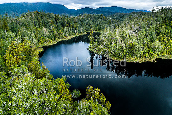 Lake Hanlon nestled amongst forest in the Mokihinui Forest. Wind and storm damage visible in forest. Radiant Range beyond. Aerial view, Karamea, Buller District, West Coast Region, New Zealand (NZ) stock photo.