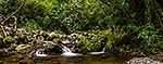 Remutaka Forest stream, Wellington